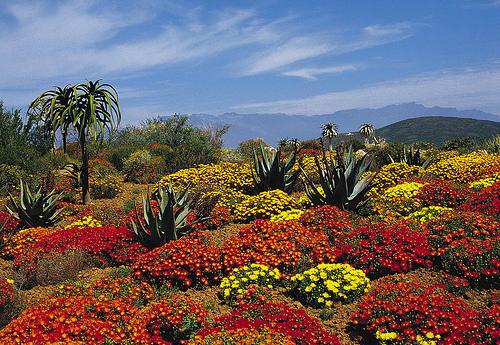 Afrika növényvilága