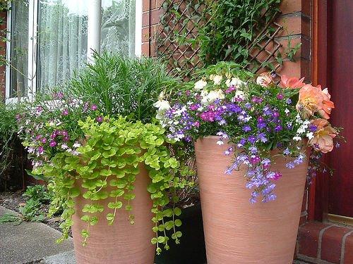 Ültessünk kőedénybe növényeket!