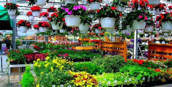 Ezeket a növényeket vásárolhatjuk meg márciusban, a...