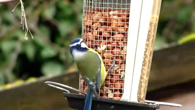 Így etesd a madarakat télen
