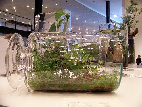 Kertészanyu:Így készíts palackkertet páfrányokból