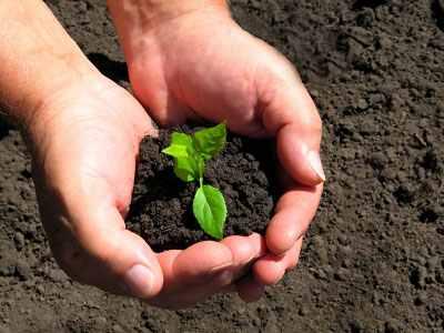 Tartsunk edzést tavasszal a növényeknek!