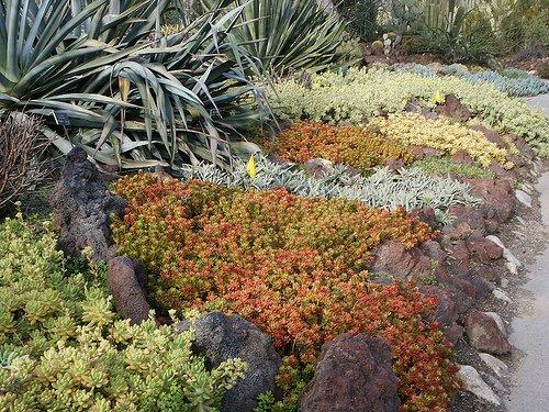Talajtakaró növények ültetése