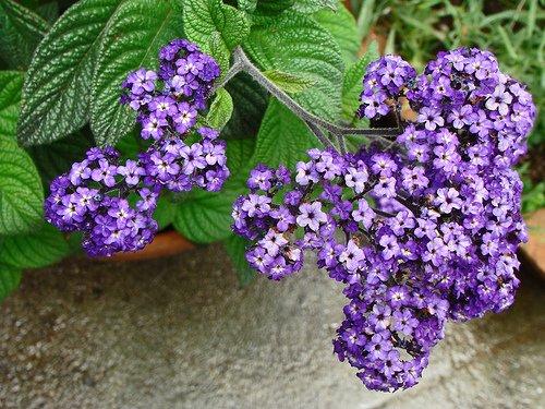 Vaníliavirág az illatos szépség!