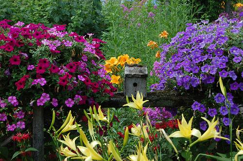 Így tervezzük meg tavasszal a virágoskertet!