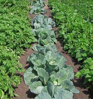Ültessünk zöldségeskertet, mert megéri!