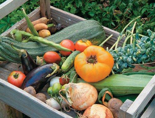 Nyári növényvédelem a veteményesben!