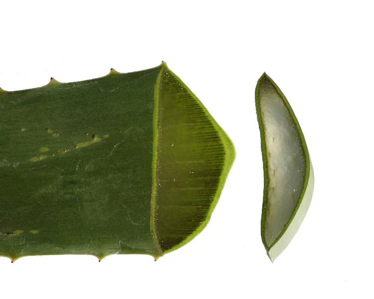 Aloe vera hatóanyagai