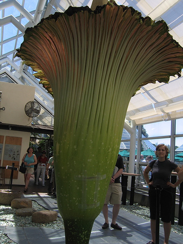 The longest flower in the world.. Dogvirag1