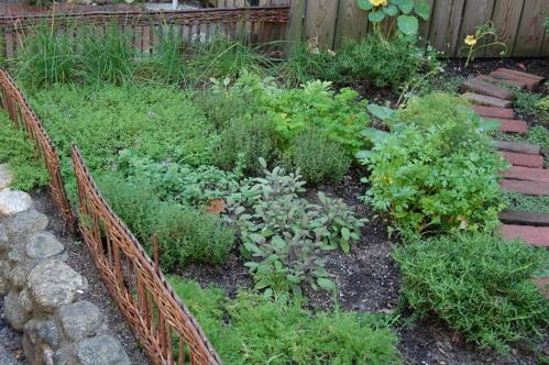 Fűszernövények ültetése és gondozása