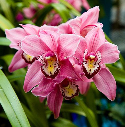Orchidea gondozása