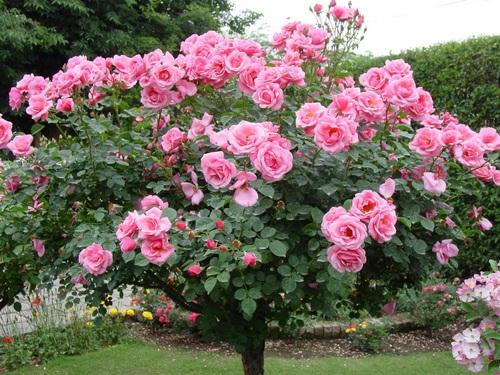 Varázsoljunk romantikus erkélyt rózsával!